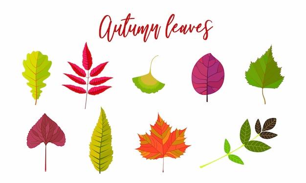 Collection de feuilles d'automne de dessin animé. illustration vectorielle plat coloré