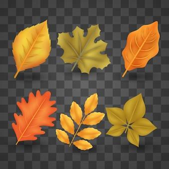 Collection de feuilles d'automne réaliste