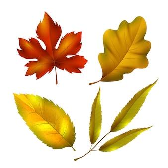 Collection de feuilles d'automne réalistes