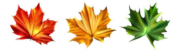 Collection de feuilles d'érable d'automne colorées