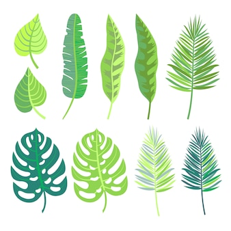 Collection de feuilles de la jungle tropicale.