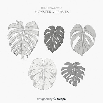 Collection de feuilles de monstera