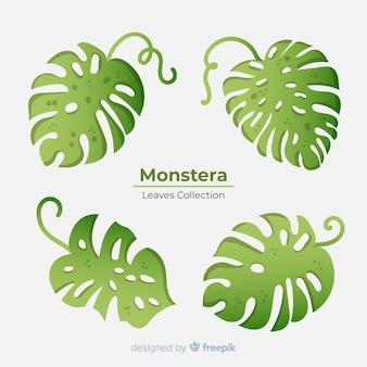 Collection de feuilles de monstera