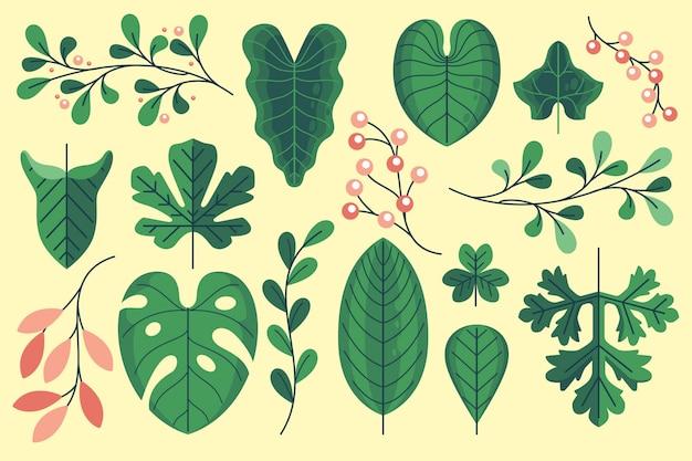Collection de feuilles plates