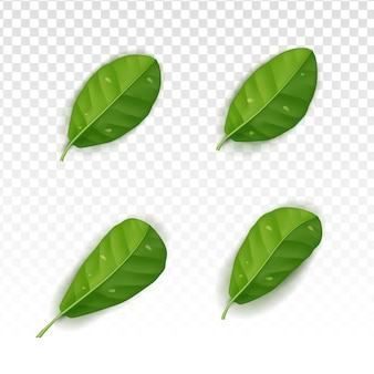 Collection de feuilles réalistes sertie d'un fond blanc transparent