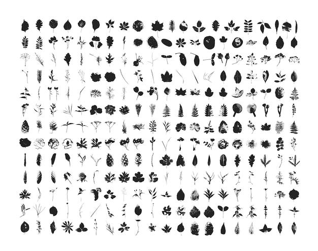 Collection de feuilles texturées