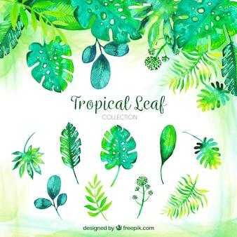 Collection de feuilles tropicales aquarelle classique