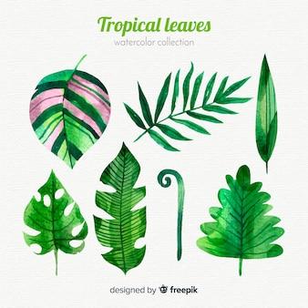Collection de feuilles tropicales aquarelle élégante