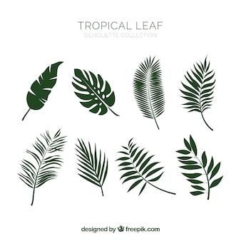 Collection de feuilles tropicales classiques dessinés à la main