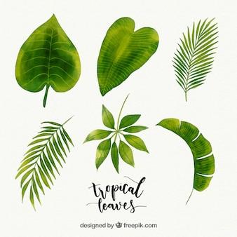Collection de feuilles tropicales dans un style aquarelle