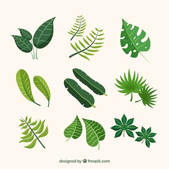 Collection de feuilles tropicales dans un style plat