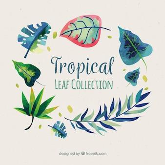 Collection de feuilles tropicales dessinées à la main élégante