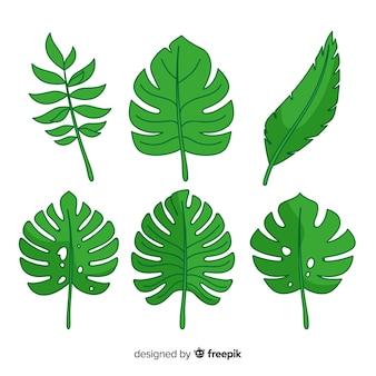Collection de feuilles tropicales exotiques avec design plat