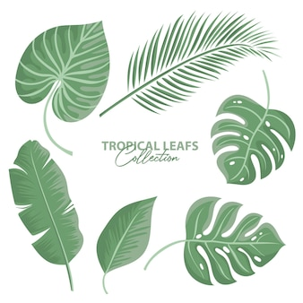 Collection de feuilles tropicales isolée
