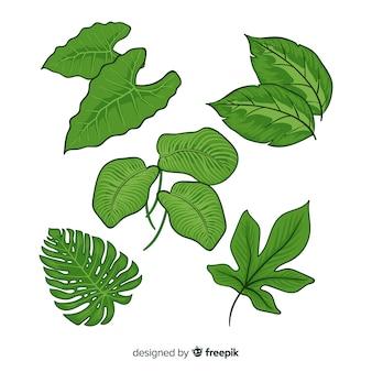 Collection de feuilles tropicales
