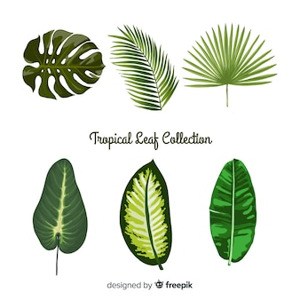Collection de feuilles tropicales