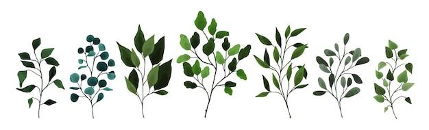 Collection de feuilles de verdure branche branches flore plantes. objets de mariage à l'aquarelle florale, feuillage botanique. illustration vectorielle élégante de printemps à base de plantes pour carte d'invitation