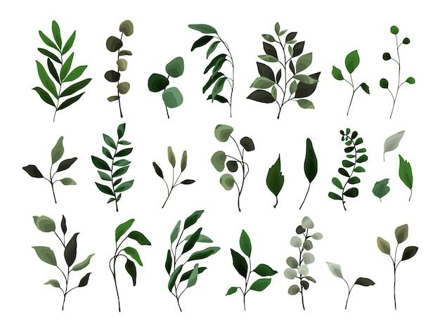 Collection de feuilles de verdure branche de plantes de flore de brindilles.