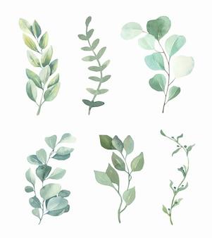 Collection de feuilles vertes aquarelle.