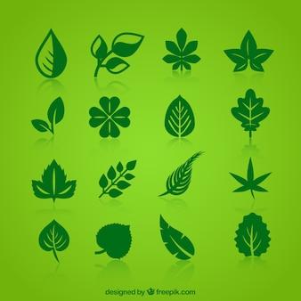 Collection de feuilles vertes icônes