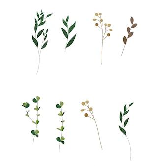Collection de feuilles vertes