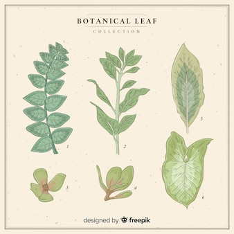 Collection de feuilles vintage