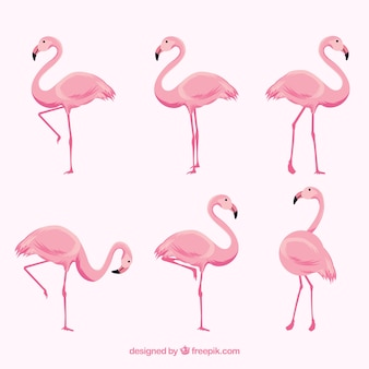 Collection de flamants roses dans différentes poses