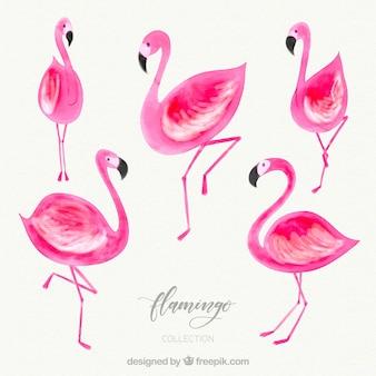 Collection de flamants roses avec différentes postures dans un style aquarelle