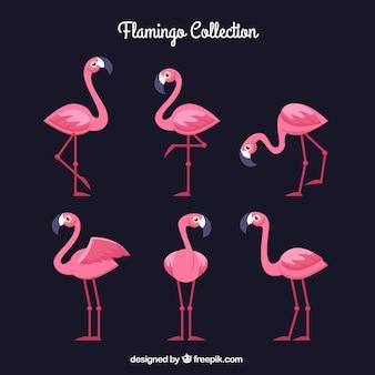 Collection de flamants roses avec différentes postures dans un style plat