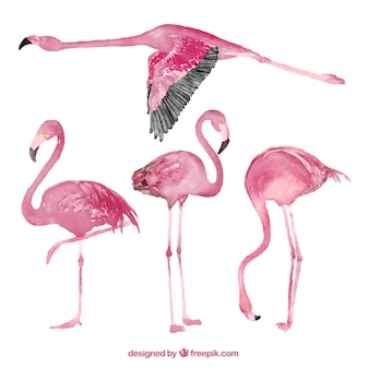 Collection flamingo à l'aquarelle