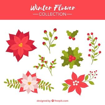 Collection de fleur d'hiver