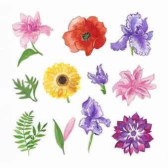 Collection de fleurs d'aquarelle peinte à la main