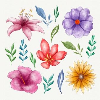 Collection De Fleurs Aquarelle Peintes à La Main Vecteur gratuit
