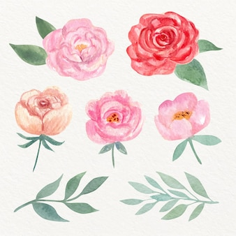 Collection de fleurs aquarelle peintes à la main