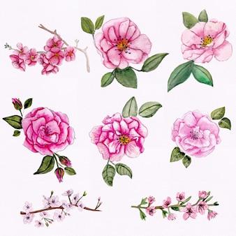 Collection de fleurs aquarelle