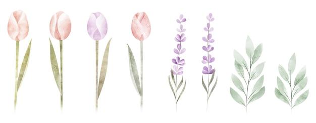 Collection de fleurs aquarelles