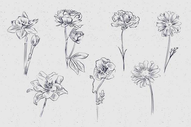 Collection de fleurs botanique vintage dessinés à la main réaliste