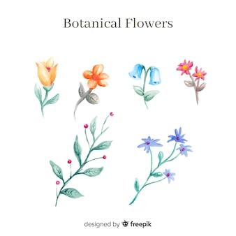 Collection de fleurs botaniques aquarelles
