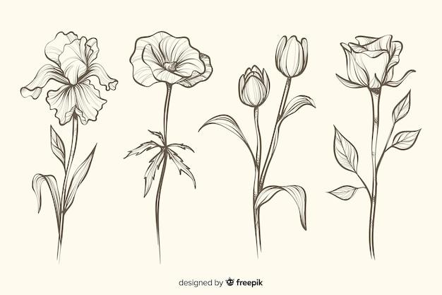 Collection de fleurs botaniques dessinés à la main réaliste