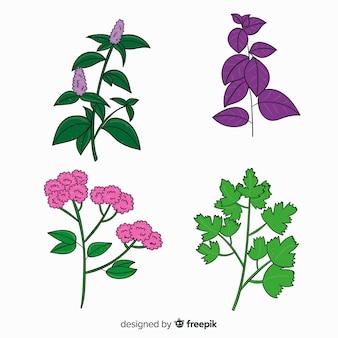 Collection de fleurs botaniques