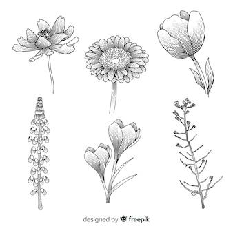Collection de fleurs dessinées à la main réaliste