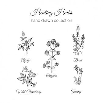 Collection de fleurs dessinés à la main