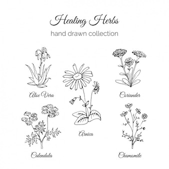 Collection de fleurs dessinés à la main