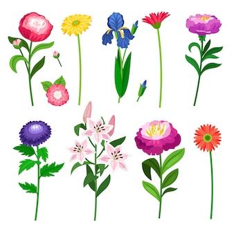 Collection de fleurs et d'éléments floraux.