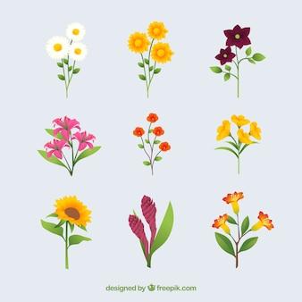 Collection de fleurs d'été en design plat
