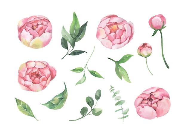 Collection de fleurs et de feuilles aquarelle