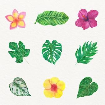Collection De Fleurs Et De Feuilles Tropicales Vecteur gratuit