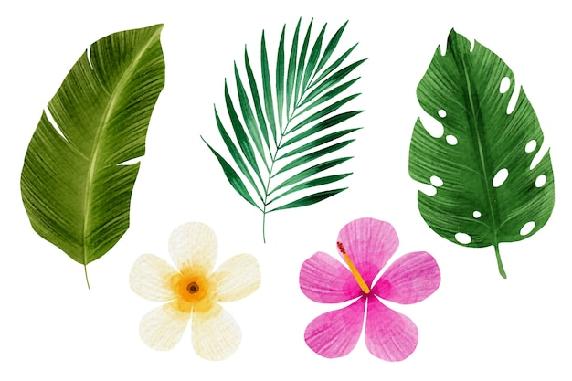 Collection de fleurs et de feuilles tropicales