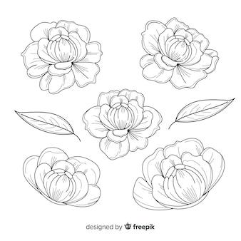 Collection de fleurs de pivoine dessinés à la main