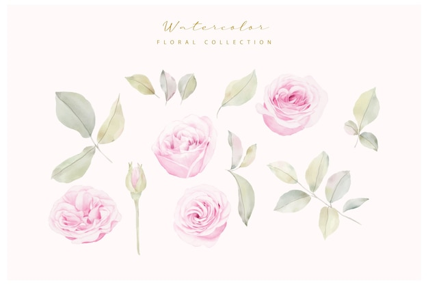 Collection de fleurs roses aquarelle